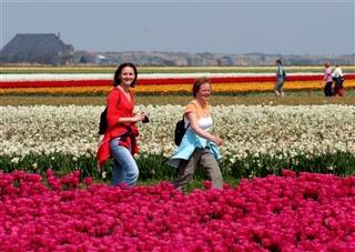 Wandelen in Bloeiend Zijpe, echt werelduniek!